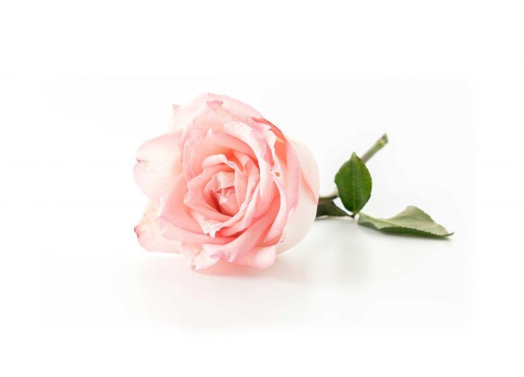 Hautajaiskukka vaalean punainen ruusu